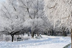 Snowy park in winter