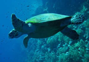 Sea turtle - an inspiration for creativity and art!