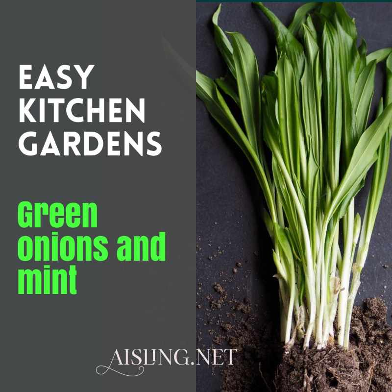 Easy Kitchen Gardens - green onions and mint